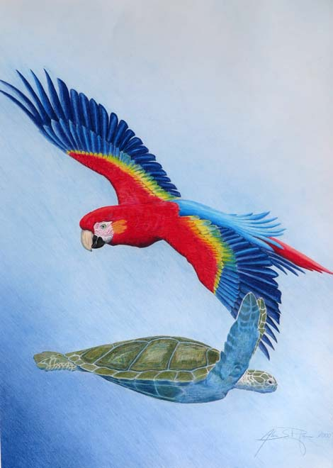 Scarlet Macaw and green turtle