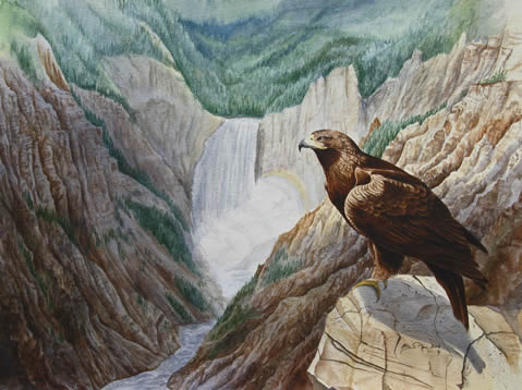 Golden Eagle over Grand Canyon of the Yellowstone