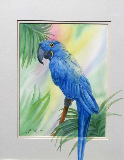 Hyacinth Macaw watercolor
