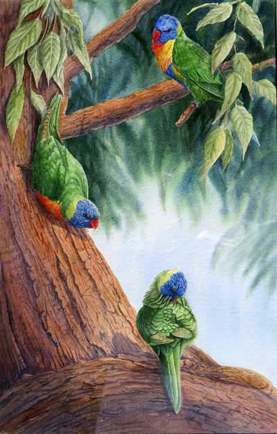 three rainbow lorikeets in a tree