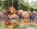 Grizzly bear watching water