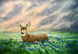 Mule deer in bluebonnets