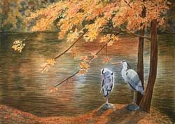 Herons in Autumn